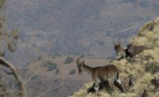 Faire un safari en Éthiopie : que faut-il savoir avant le départ ?